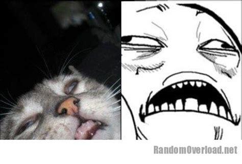 Jesus Cat Meme - this cat totally looks like sweet jesus meme randomoverload