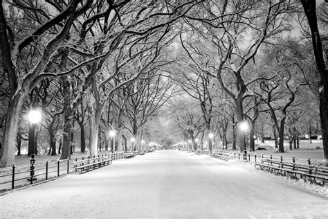 Christmas Scene Wall Murals snowy path amp trees central park new york winter wall