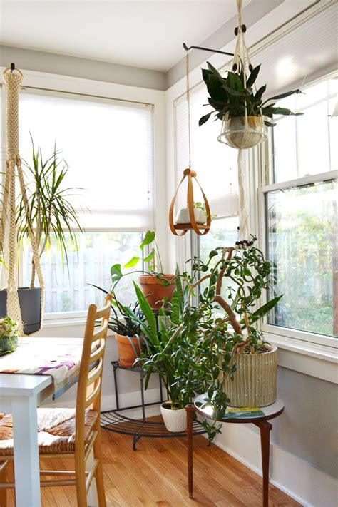apartment plants ideas ideas for decorating with plants apartment therapy how to