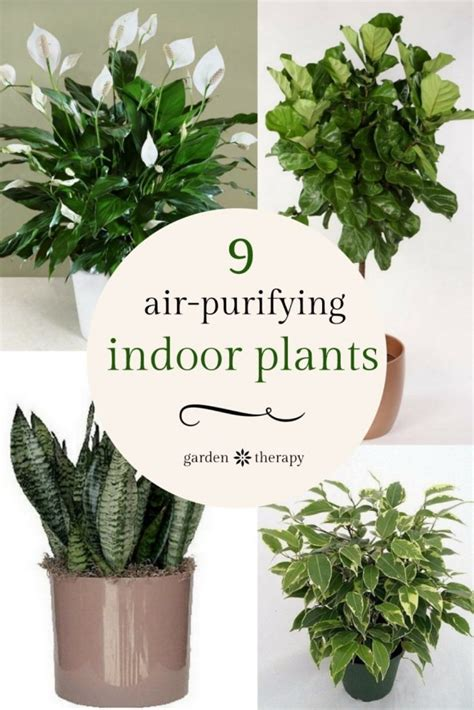 office plants no sunlight liven up your home with indoor vertical wall planters