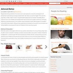 Adrenal Detox Program by Survivalist Pearltrees
