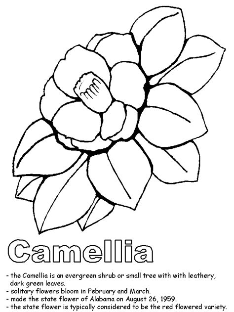 camellia flower coloring page camellia coloring pages and printables