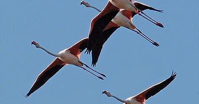 cundo y dnde ver 8416702330 el herrerillo cu 225 ndo y d 243 nde ver aves en catalu 241 a