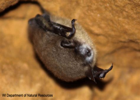 disease that killed millions of insect eating bats has now