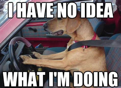 Dog Driving Meme - driving test memes test best of the funny meme