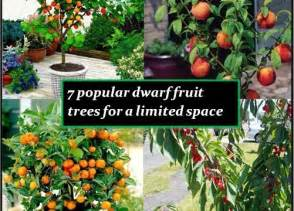 7 Popular Dwarf or Miniature Fruit Trees For A Limited