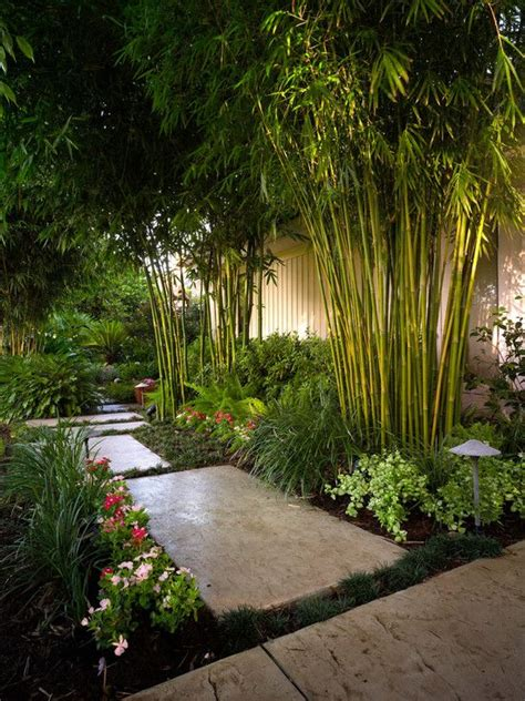 bamboo trees for backyard asian inspired garden design bamboo trees along the
