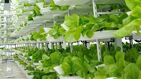 Vertical farming: A hot new area for investors?commentary