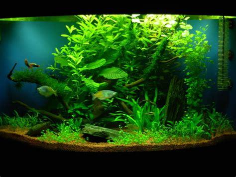 aquascape plants list aquascaping juwel trigon 190 corner tank uk aquatic