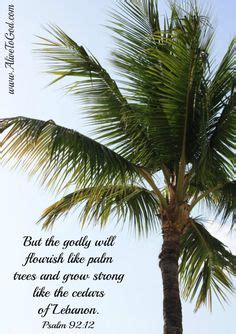 tree in bible bible quotes on palm trees bible quotes and