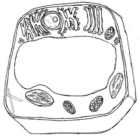 plant cell coloring page key organic molecules