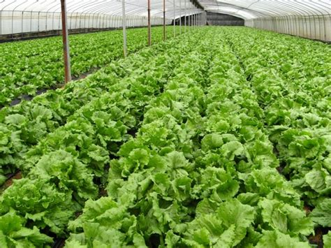 organic farm vegetables free stock photos in jpeg jpg