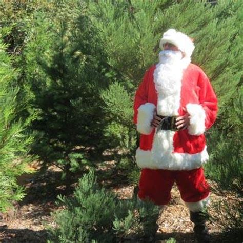 purchase your christmas tree in los gatos ca