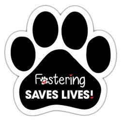 how to foster puppies how to foster part iii saving them all dallas pets alive