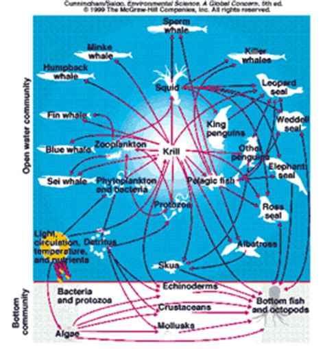 ecological transition how we see networks the view from