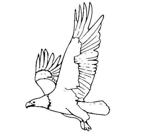 coloring page eagle flying eagle flying coloring page coloringcrew com