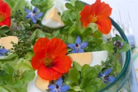 fiori commestibili fiori commestibili mangiare i fiori fa bene alla salute