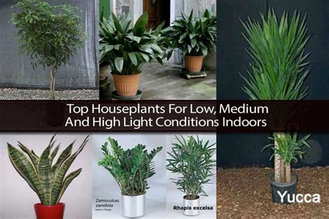 top houseplants for low medium and high light conditions indoors houseplants pinterest
