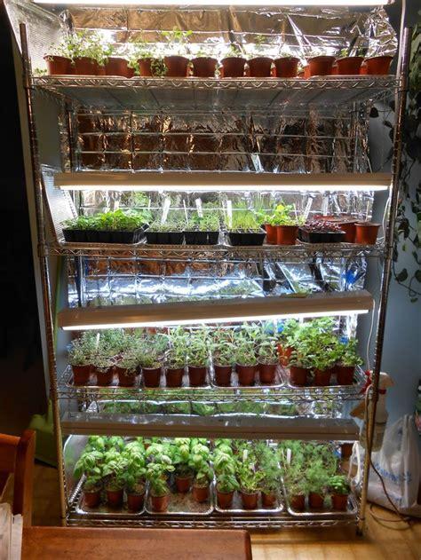 sproutsandstuff indoor vegetable gardening indoor seed