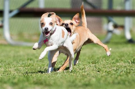 places to play with puppies near me conejo creek park 50 photos 53 reviews parks 1350 avenida de las