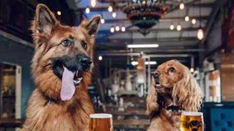 brew dogs columbus brewery offers paid paw ternity leave for employees with new puppies news network