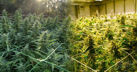 cultivo interior cultivo en interior vs exterior en exterior ventajas y
