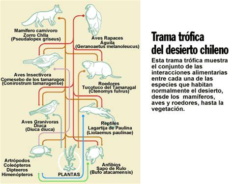 cadenas alimenticias del desierto trama tr 243 fica del desierto chileno icarito