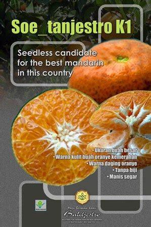 teks rekaman percobaan membuat jus mangga teknologi perbaikan jeruk tanpa biji balitjestro