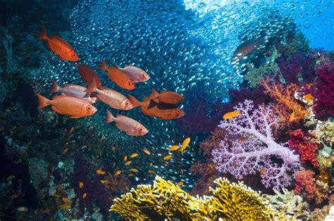 imagenes de la vida marina la mitad de la vida marina ha desaparecido en los 250 ltimos
