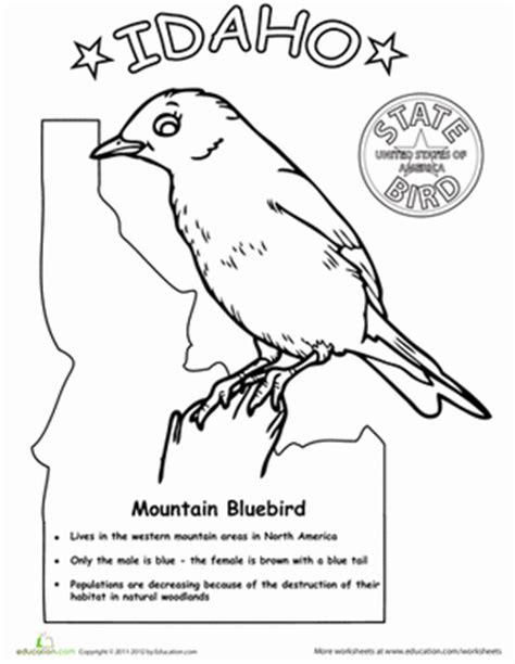 bluebird coloring pages preschool idaho state bird worksheet education com