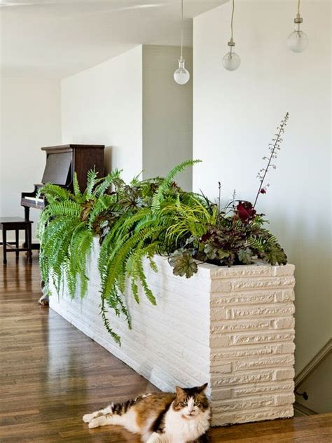 inside home plants how you can bring tropical beauty into your house