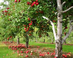 how much sunlight is needed to grow apple trees garden