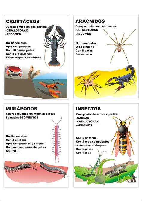 imagenes animales artropodos clasificaci 243 n de los artr 243 podos plagda infantil