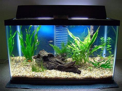 home accessories cool aquarium decorations how to make a fish tank fish tank coffee table aquarium tank set up mine needs an extreme make over
