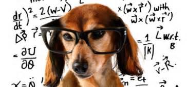 brain for dogs brain boosting modern magazine