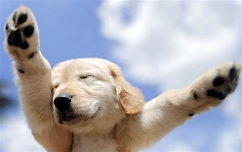 awesome dogs 17 reasons why a makes your more awesome