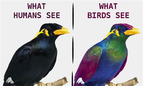 bird vision spectrum www pixshark com images galleries
