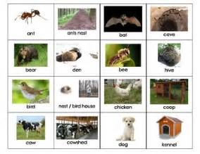 animal home names by my teaching inspiration teachers