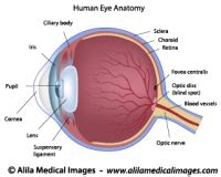 eyeball diagram labeled vision gallery free images for education