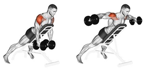 bent over lateral raises on incline bench bent over lateral raises on incline bench 28 images