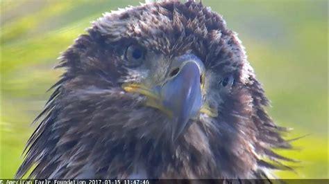 aef nefl eagles juliet the juvie 03 183 15 183 17 youtube