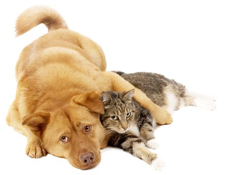 puppy and cat cat and white background
