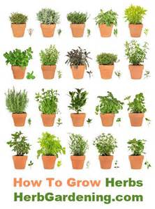 herbs in containers are easy to grow garden ideas