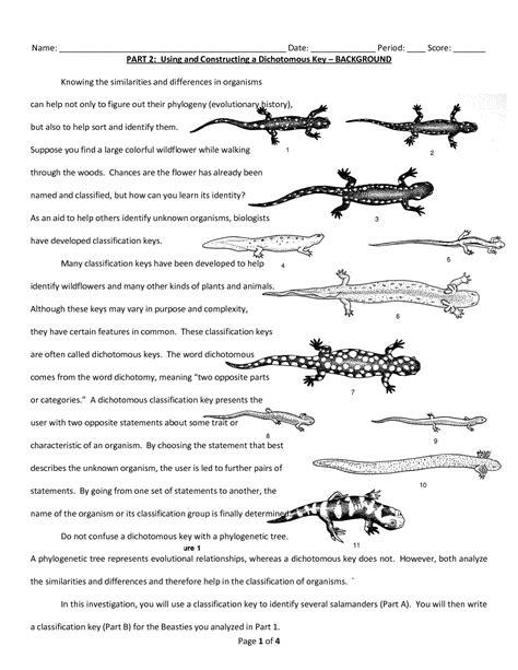 Dichotomous Key Worksheet by 28 Dichotomous Key Worksheet Sharks 18 Best Images Of Shark Dichotomous Key Worksheet