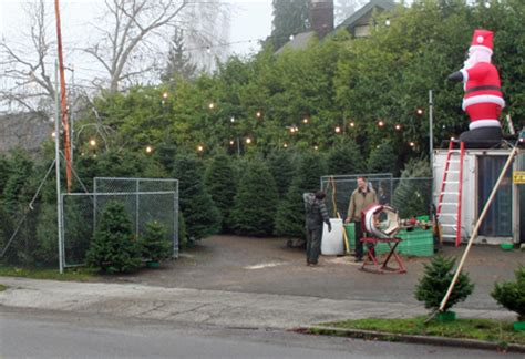 christmas tree lots open for business my ballard