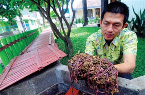Ternak Cacing Gagal hiii meskipun menjijikkan pria ini raup untung ratusan