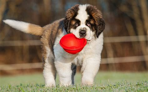 best food for large breed puppies best large breed food tips and reviews of the best brands