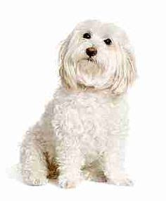 allergy friendly dogs save the dogs on adoption dogs and pets