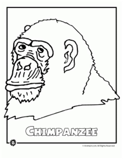 endangered animals coloring pages animals from north