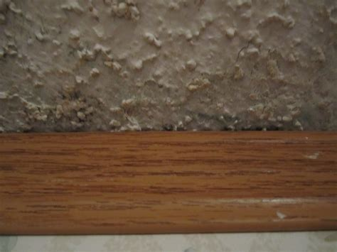 what does mold look like in a bathroom what does mold look like in a bathroom 28 images